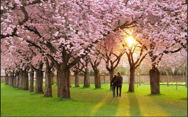 love-in-spring