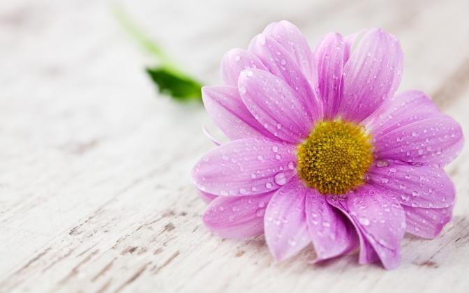 7002608-pink-wet-flower-hd