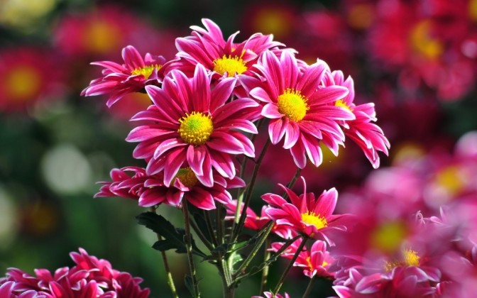 cool-hd-wallpapers-flowers-HD-Desktop-BAckgrounds-1024x640